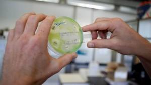 bacteria-lab-research-getty-afp-jorge-dirkx