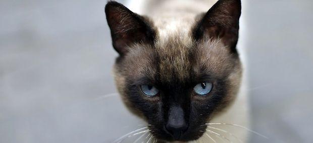 Elle d masque les voleurs de son chat sur le bon coin - Le bon coin arbre a chat ...