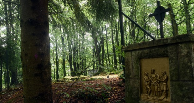 Pol mique autour d 39 un d frichage audun le tiche - Abattage d arbre gratuit contre bois ...