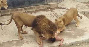 Une scène terrible s'est déroulée samedi sous les yeux des visiteurs d'un zoo de la ville de Santiago. (Photo : Twitter)
