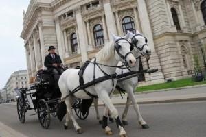 Une avancée sociale pour les chevaux de calèche de Vienne, lesquels travailleront désormais 18 jours par mois au lieu de 20. (illustration AFP)