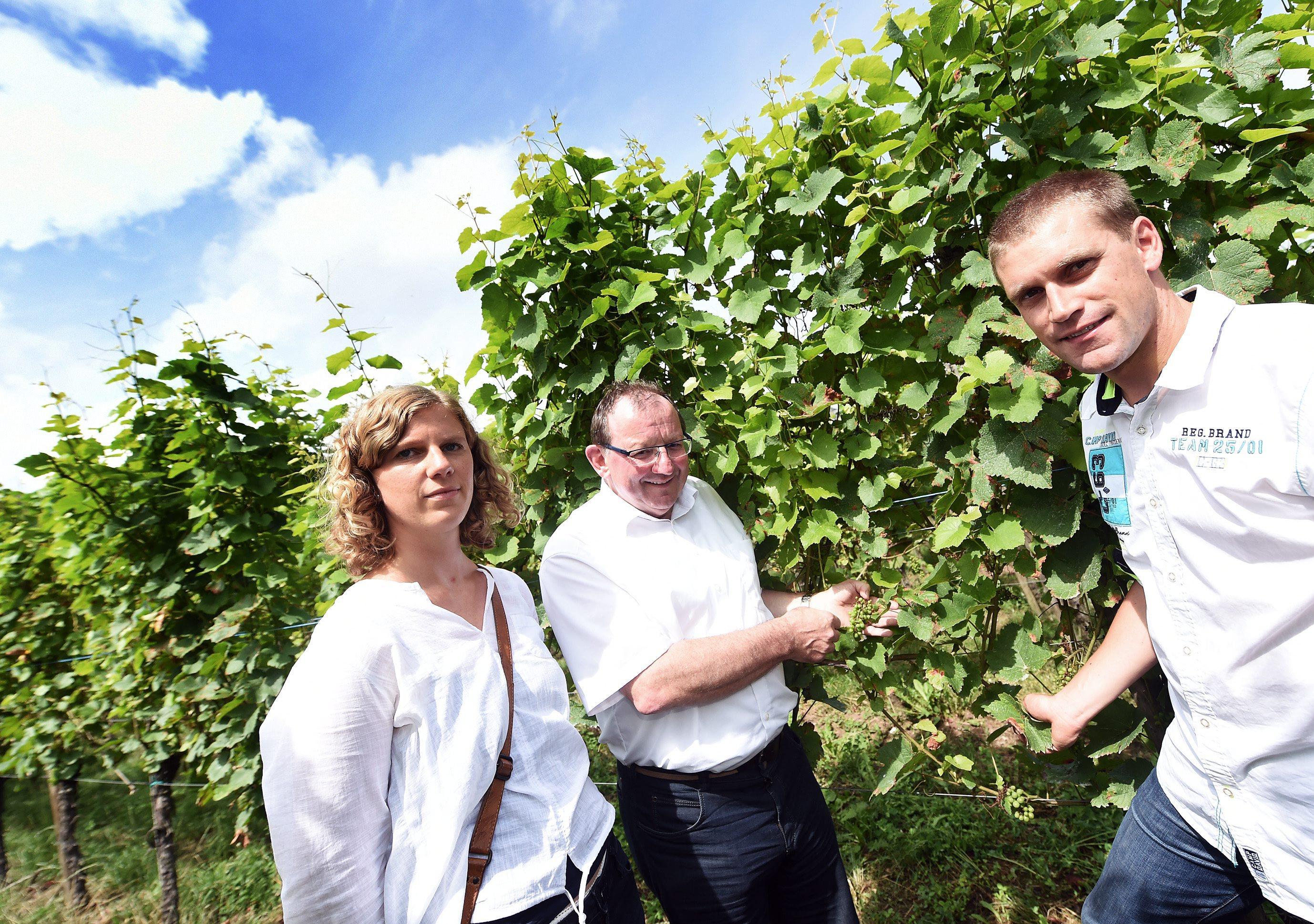 ernand Etgen, entouré de Mareike Schulz et Robby Mannes, constate les dégâts causés par le mildiou. Jamais la maladie n'avait été aussi dévastatrice. (photo Isabella Finzi)