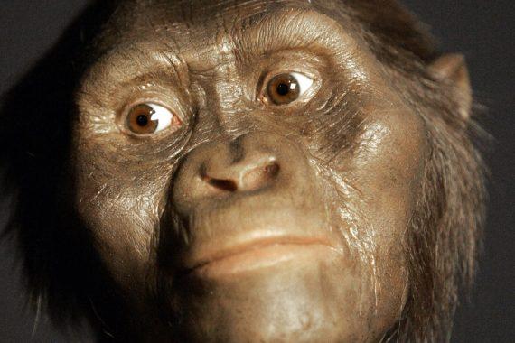 Lucy, la plus célèbre des australopithèques, vivait en Afrique il y a 3,18 millions d'années. (Photos AP)