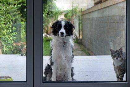 Lorsque la loi sera adoptée, les délits les plus graves de maltraitance animale seront punis d'une peine d'emprisonnement de huit jours à trois ans et d'une amende de 251 euros à 200 000 euros. (illustration Fabrizio Pizzolante)