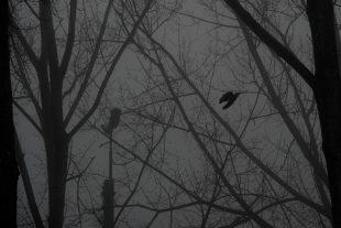 MeteoLux prévoit de la brume et du brouillard samedi en matinée et en soirée. (photo d'illustration LQ)