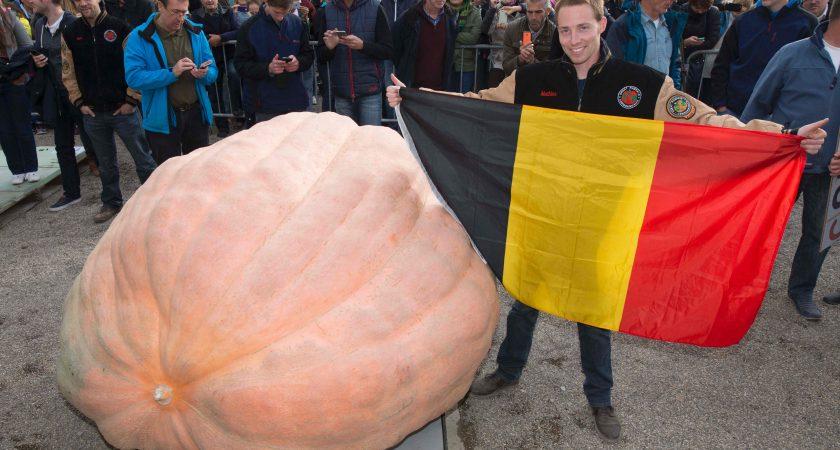 Un belge bat le record du monde de la plus grosse citrouille - Record du monde developpe couche ...
