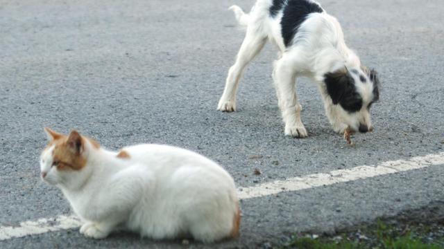 Taïwan interdit la consommation de viande de chien et de chat