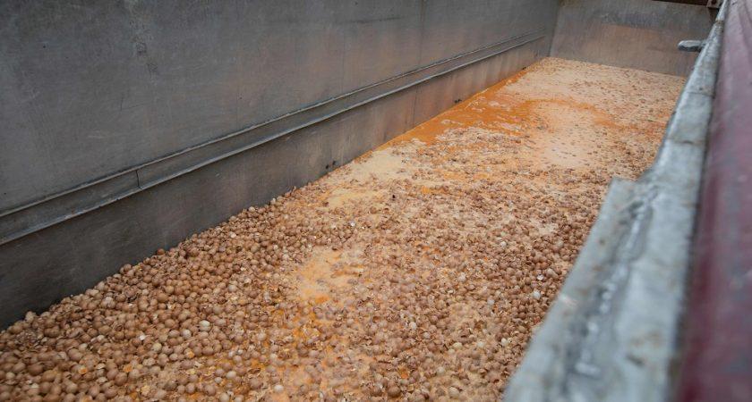 Vingt tonnes d'oeufs contaminés au fipronil vendus au Danemark (officiel)