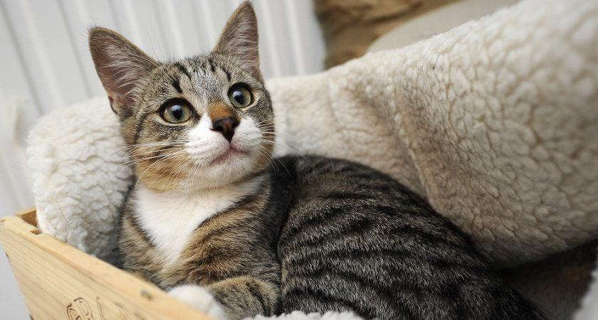 Six mois de prison ferme pour avoir tué le chat