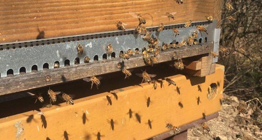 apiculteur koch