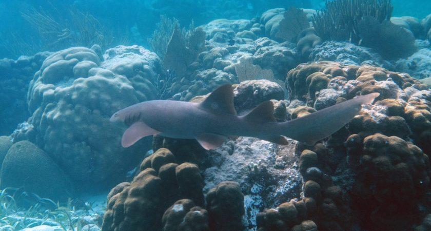 datant plus de poissons dans la mer